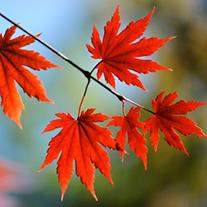 SOL leaves